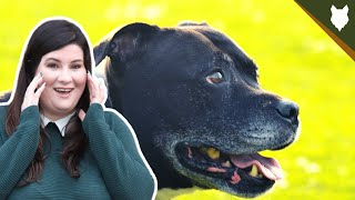 ARE STAFFORDSHIRE BULL TERRIER GOOD GUARD DOGS?
