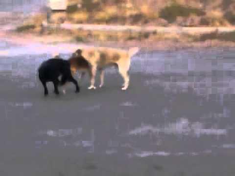 فیلم کردن انسان توسط سگ