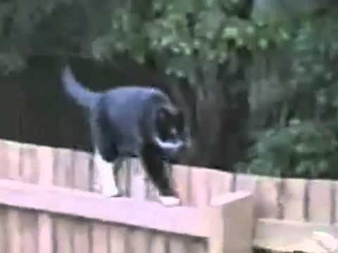 Funny Cat video, Amazing animals, stupid pet tricks