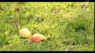 Копия видео Диетолог Ковальков Что съесть, чтобы похудеть