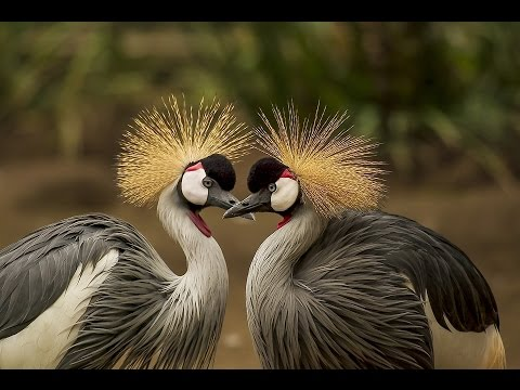 Beautiful Love Birds Photos, Images, Wallpapers & Pictures Video