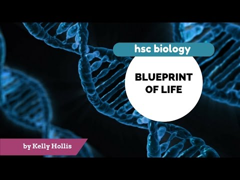Blueprint of Life 9.3.3.iii) - DNA structure