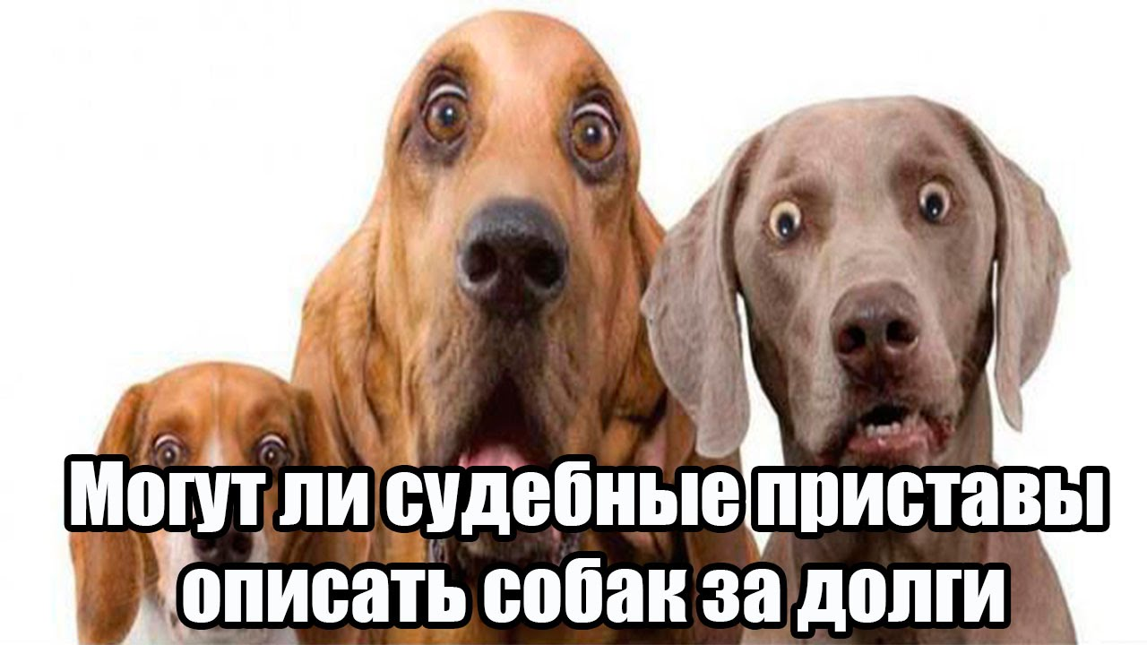 фото у собак долги картинка широкой