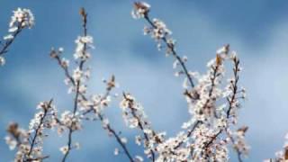 Mad Dog Mcrea - Rose In The Heather/Hanleys Tweed