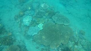 Beautiful Coral Reef at Virgin Beach on Bali Island, Indonesia Tropical Fish Pristine Beach | Lucky Vagabond