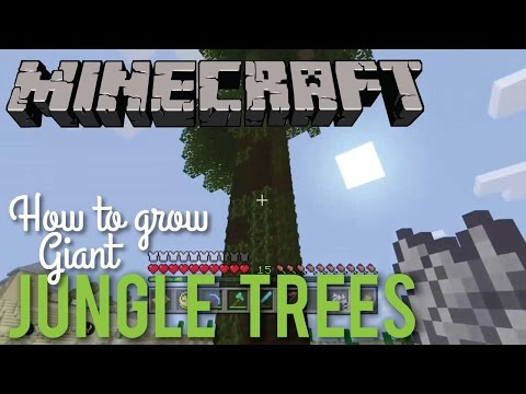 How To Grow Giant Jungle Trees In Minecraft