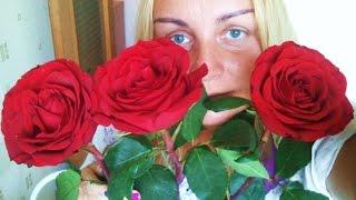 видео Что делать чтобы розы стояли дольше
