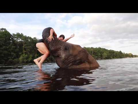 SWIMMING WITH BUBBLES THE ELEPHANT