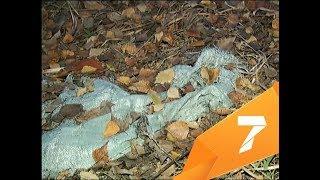 Жители Академгородка нашли рядом с домами пакеты с трупами собак