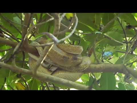 Tobago Trinidad Surinam Video Sehenswürdigkeiten