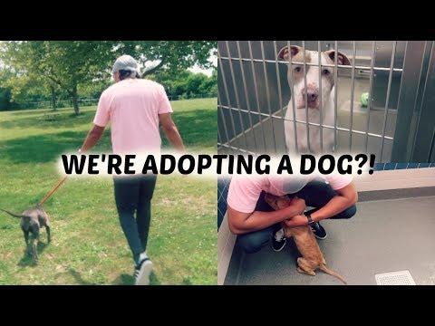 WE'RE ADOPTING A DOG?!