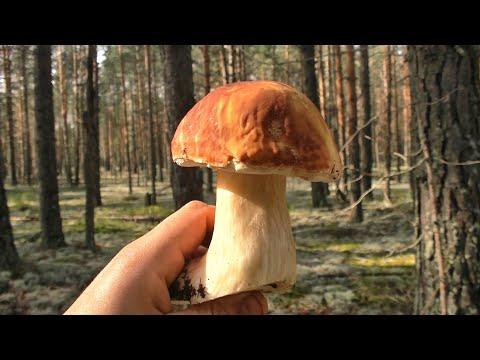 По грибы, по ягоды #262
