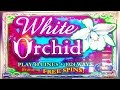 White Orchid Slot - UP TO $16 MAX BETS! - YouTube