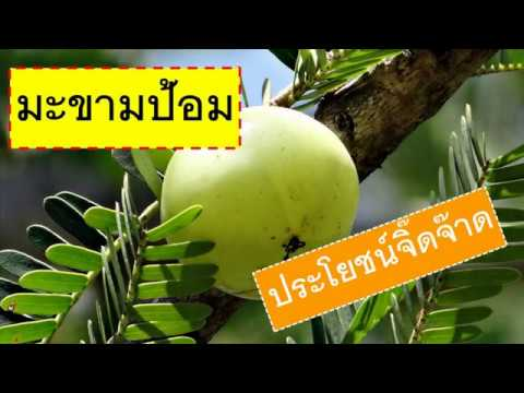 6 ประโยชน์มะขามป้อม เจ็บคอ แก้ไอ ดี๊ดี สรรพคุณสมุนไพรของดีประจำบ้าน