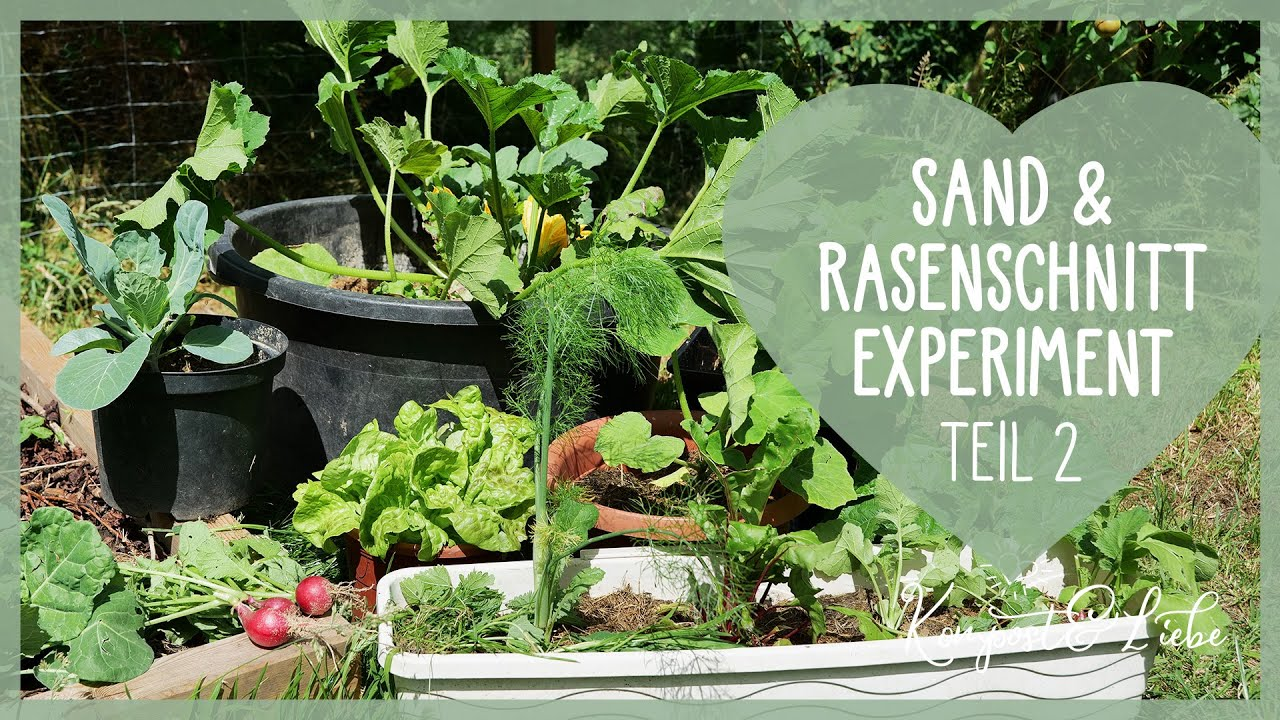 Mein Sand und Rasenschnitt Versuch TEIL 2 👨🌾🌱 Gemüse düngen mit Mulch 💚 Fazit und Erklärungsversuch