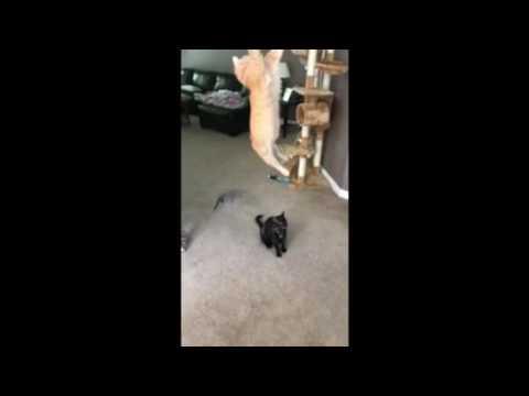 Crazy cat tricks