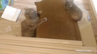 Ксюша с котятами воспитание котят кошка и котята