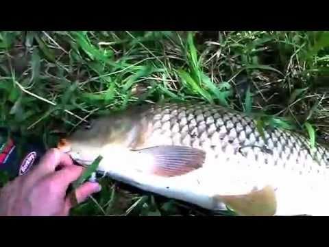 Carp Fishing With Corn In The Creek