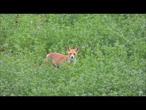 Na lovu - Videolovy - Life in nature