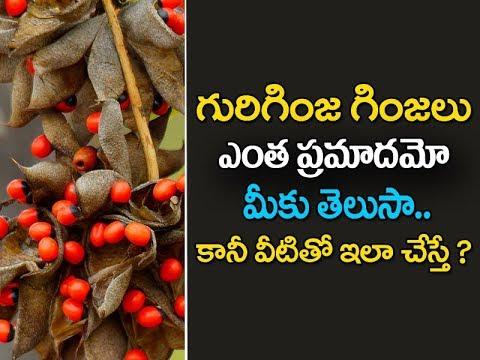 Gurivindha Seeds Information For Kids