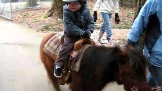 Jman and his first pony ride