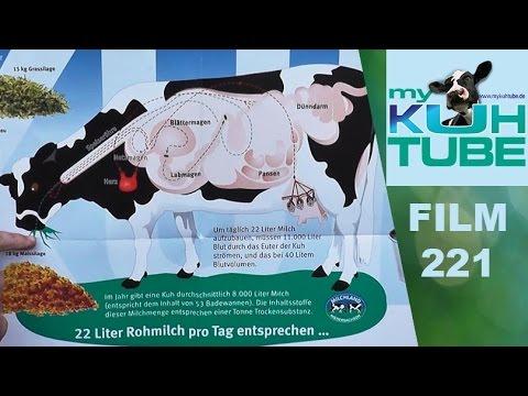 Komplizierte Verdauung - einfach erklärt - My KuhTube Film 221 - YouTube