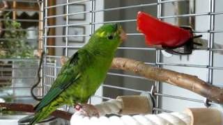 Paprika Macht Nicht Dick!/red Pepper ... Green Linnie ... Nice Colours :-)