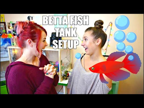 SETTING UP MY NEW BETTA FISH TANK! 🐟