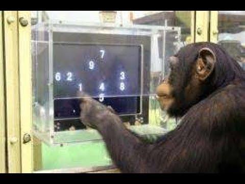 the-world's-smartest-animals!