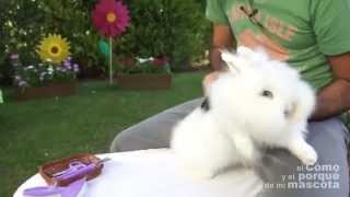 Кролики - как расчёсывать кролика Ангора?