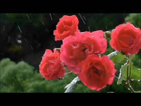 Rain, Rose, Saxophone (붉은장미)