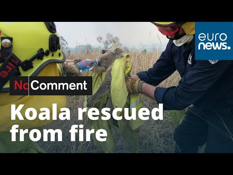 Unha muller salva un koala atrapado nos incendios de Australia
