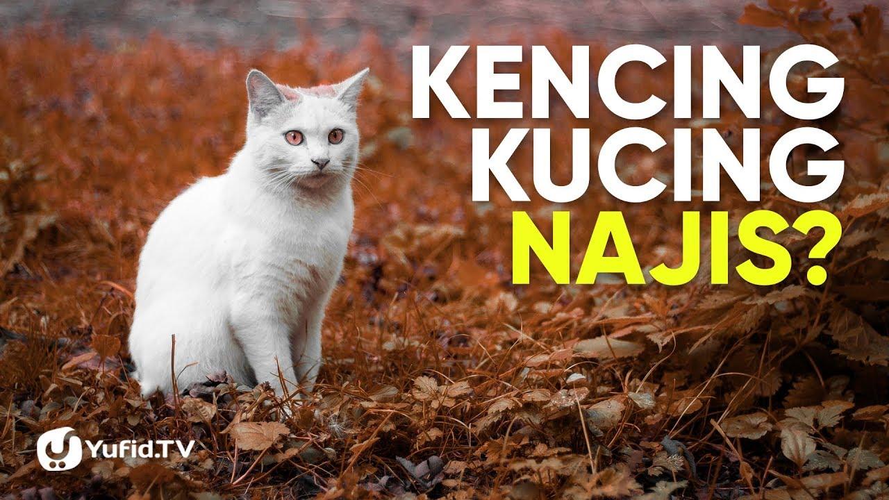 Kucing Dalam Islam Kencing Kucing Najis Poster Dakwah Yufid Tv Youtube