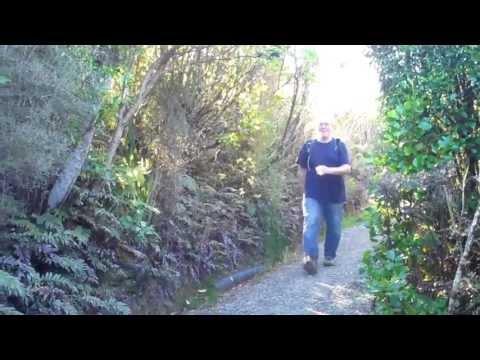 Mt Cargill & Organ Pipes Track