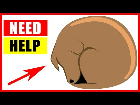 14 Critical Signs Your Dog Is Begging For Help