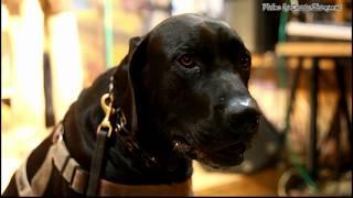 Силя Сергей Селюнин и Чёрный пёс Петербург Лео фрагмент для фильма