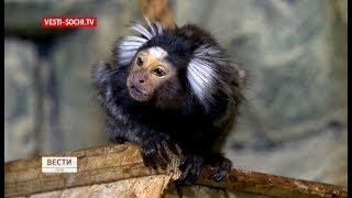 Контактный зоопарк Сочи получил престижную награду