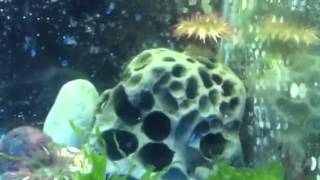 Nano puget sound biotope