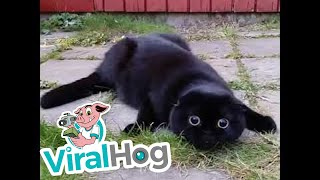 Cute Cat Sees Something Spooky || ViralHog
