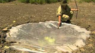 Ray Mears-Making a solar still in the Desert