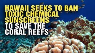 Hawaii Bans Sunscreen For Killing The Ocean