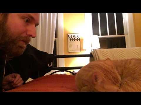 Vengeance Meow: Alternate Cut