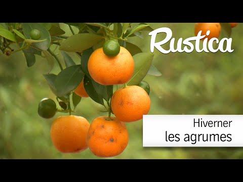 comment entretenir les agrumes jardinerie truffaut tv doovi. Black Bedroom Furniture Sets. Home Design Ideas