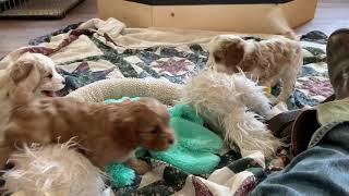 Puppies make us laugh