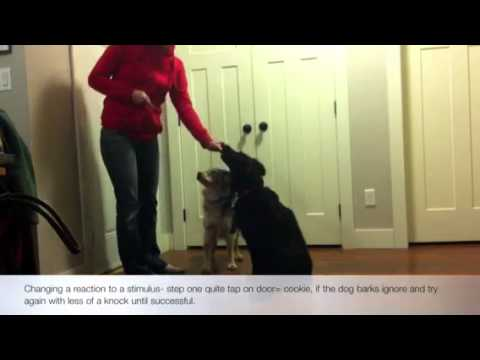 Stop Dog Barking At The Door Youtube