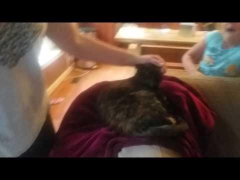Evil Cat documentary part 1