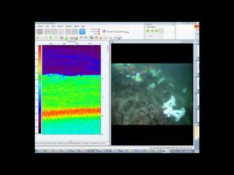 Correlated video and hydroacoustic file showing ground fish in Puget Sound 10102013 1306