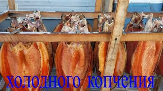 Рыба холодного копчения . в домашних условиях
