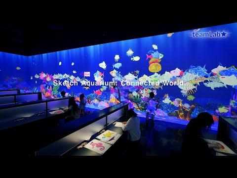 Sketch Aquarium: Connected World