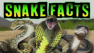 Snake Facts for Kids!